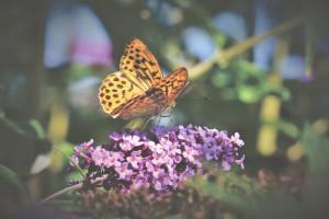 butterfly-4059495_1920